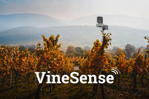 VineSense.eu